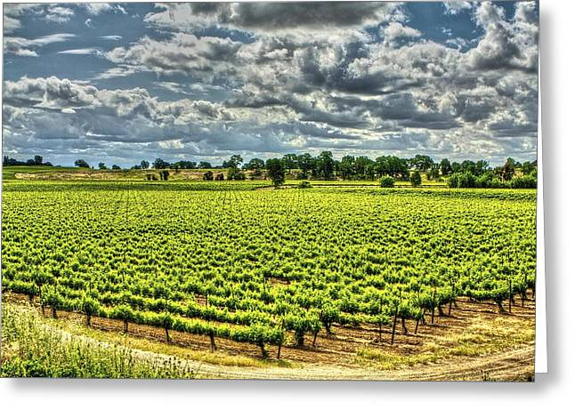 Vineyards Almost Ripe Greeting Card