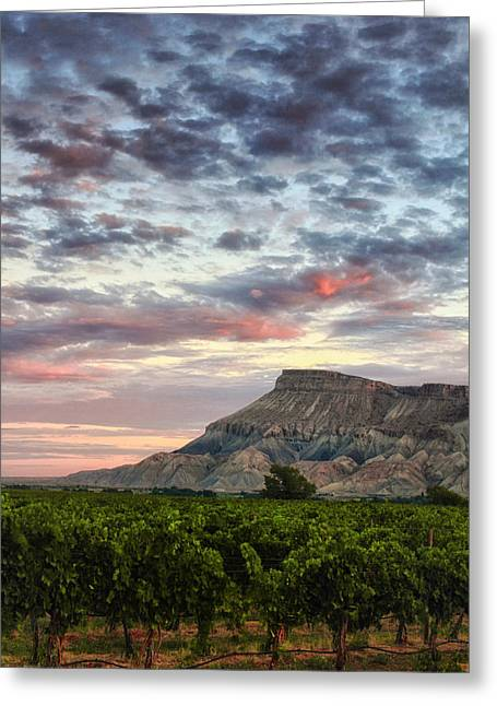 Vineyards And Mt Garfield Greeting Card