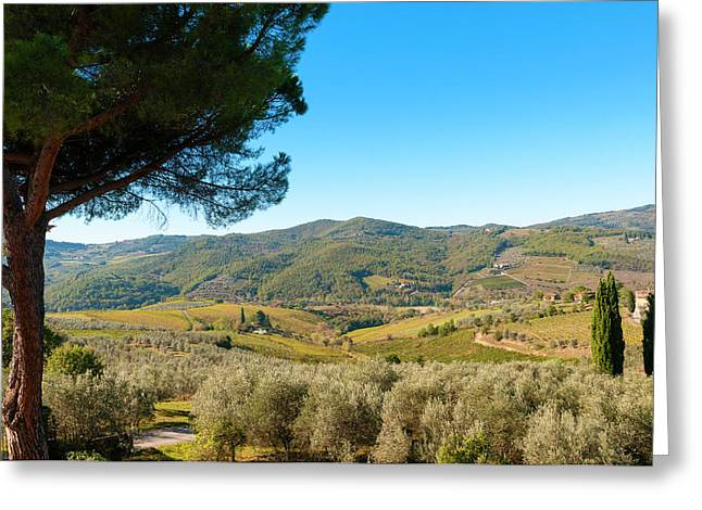 Vineyards And Olive Groves, Greve Greeting Card by Nico Tondini