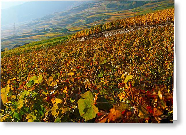 Vineyards And Village In Autumn, Valais Greeting Card by Panoramic Images