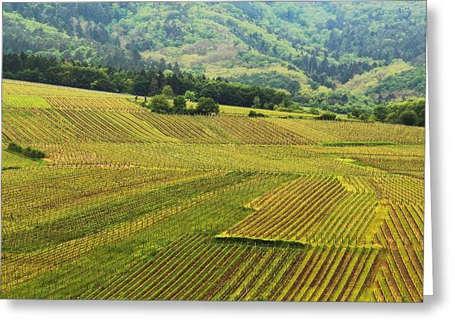 Vineyards Below Zellenberg France 1 Greeting Card by Greg Matchick