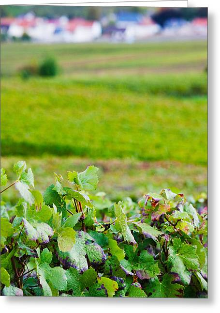 Vineyards In Autumn, Chigny-les-roses Greeting Card