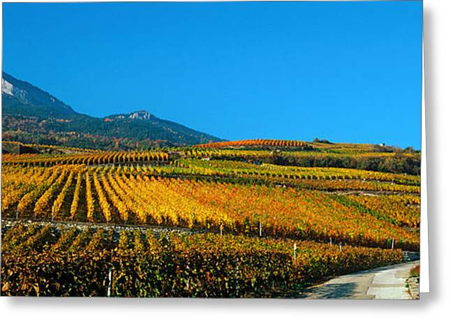 Vineyards In Autumn, Valais Canton Greeting Card by Panoramic Images