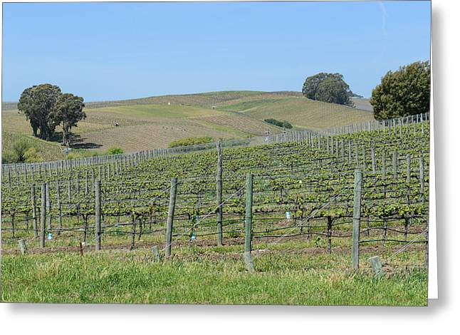 Vineyards In Napa Valley California Greeting Card