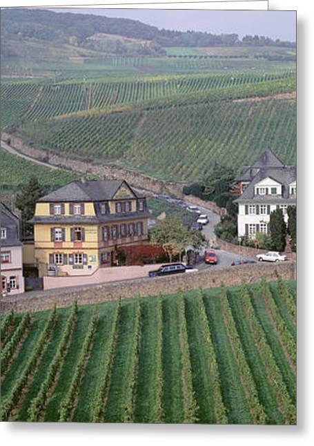 Vineyards In Town Of Rudesheim Greeting Card