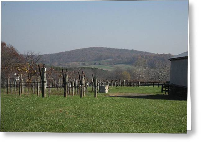 Vineyards In Va - 121229 Greeting Card by DC Photographer
