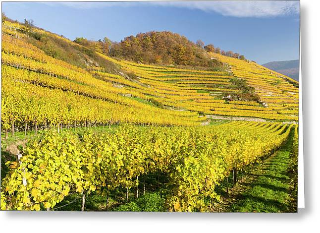 Vineyards Near Village Spitz Greeting Card