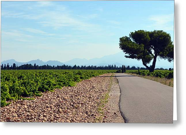 Vineyards Of Chateauneuf Du Pape Greeting Card by Carla Parris