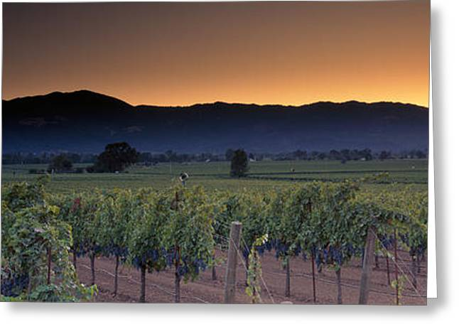 Vineyards On A Landscape, Napa Valley Greeting Card