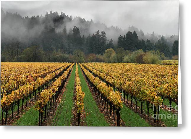 Vineyard Russian River Wine Country Sonoma County California Greeting Card