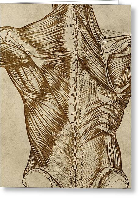 Vintage Back Anatomy Greeting Card by Flo Karp