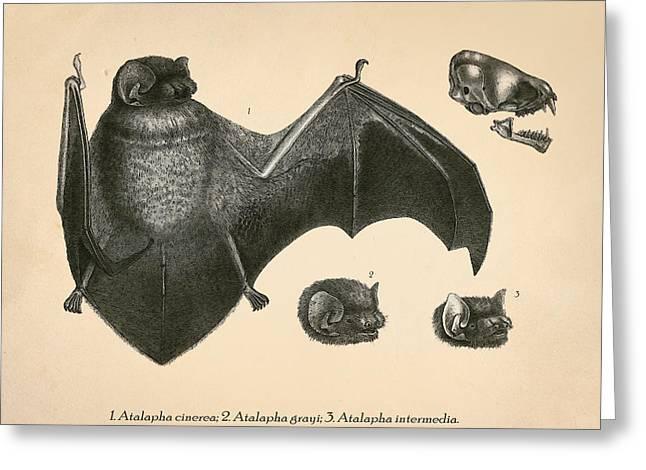 Vintage Bat Anatomy Greeting Card