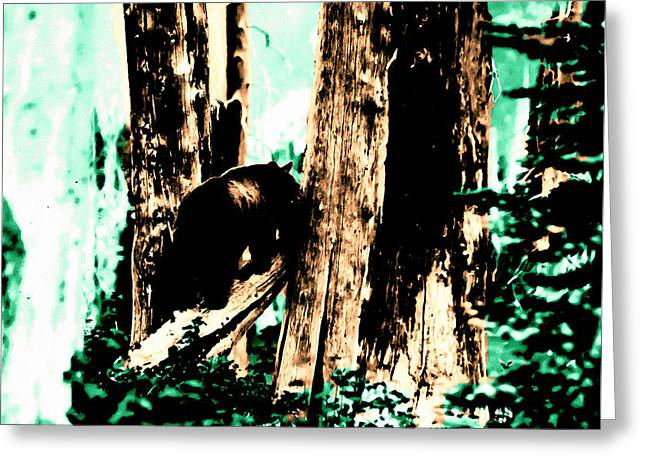 Greeting Card featuring the photograph Vintage Bear In The Mount Rainier Forest Early 1900 Era... by Eddie Eastwood