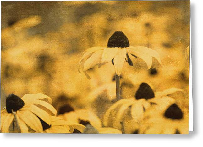 Greeting Card featuring the photograph Vintage Black-eyed Susans by Peggy Collins
