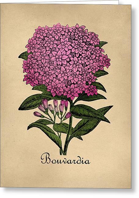 Vintage Bouvardia Botanical Greeting Card by Flo Karp