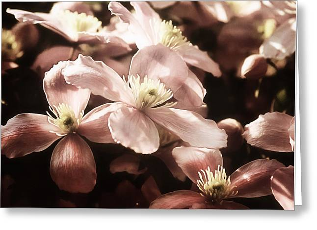 Vintage Clematis Greeting Card by Georgiana Romanovna