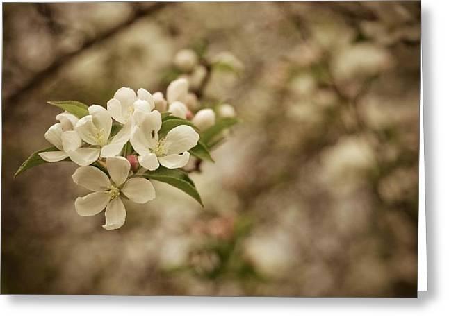 Vintage Crabapple Blossom Greeting Card