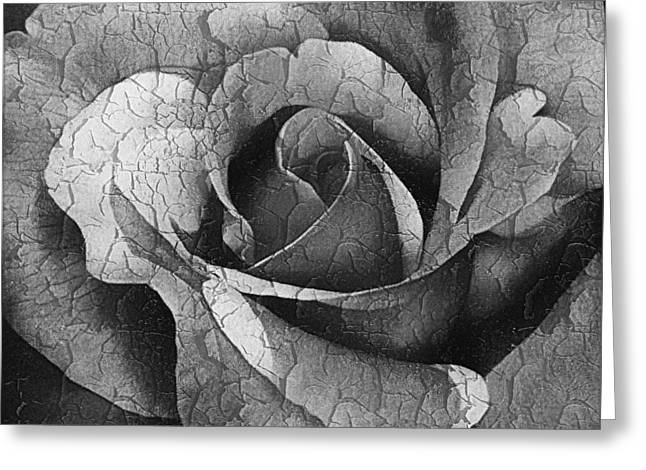 Vintage Cracked Rose Greeting Card by Georgiana Romanovna