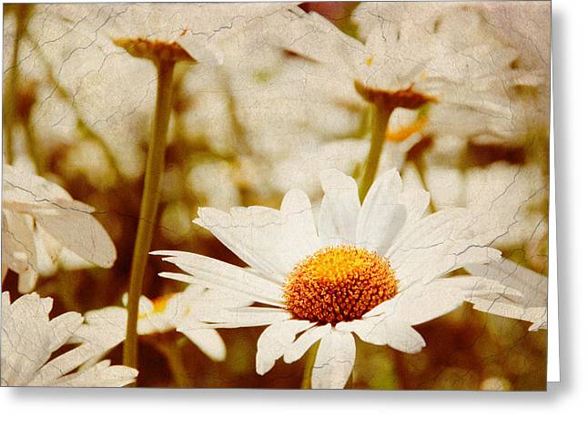 Vintage Daisy Greeting Card