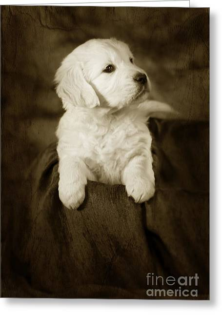 Vintage Golden Retriever Pup Greeting Card by Angel  Tarantella