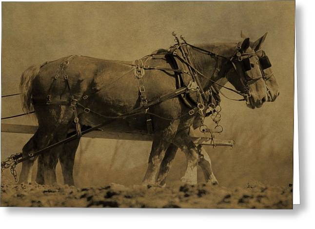 Vintage Horse Plow Greeting Card by Dan Sproul