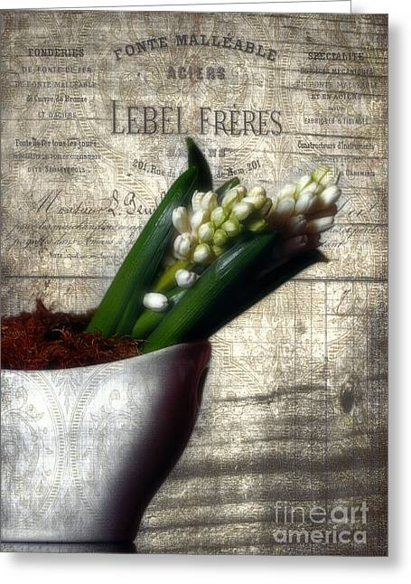 Vintage Hyacinth Greeting Card by Darren Fisher