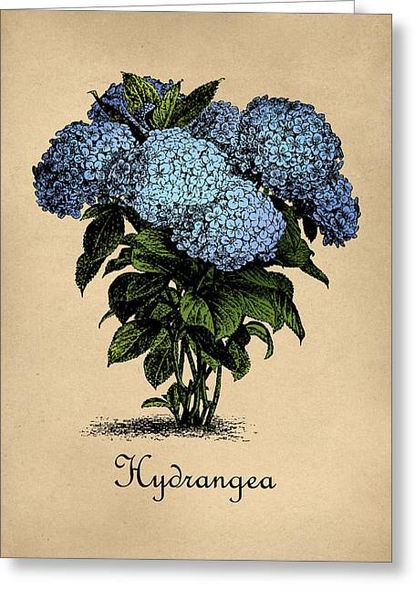 Vintage Hydrangeas Botanical Greeting Card