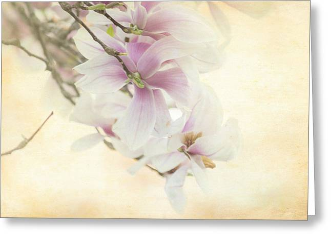 Vintage Magnolia Greeting Card by Tracy Munson