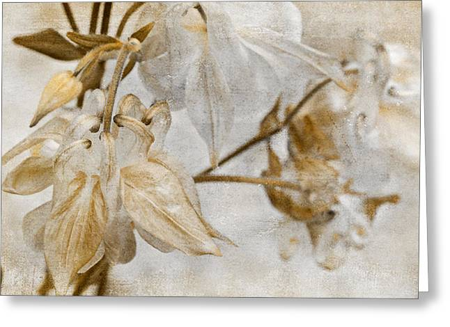 Greeting Card featuring the photograph Vintage Neutral Flowers by Peggy Collins