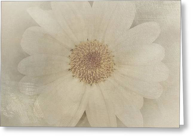 Vintage Painterly White Daisy  Greeting Card