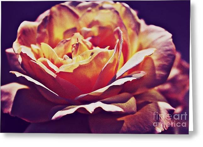 Vintage Rose Greeting Card by Judy Palkimas