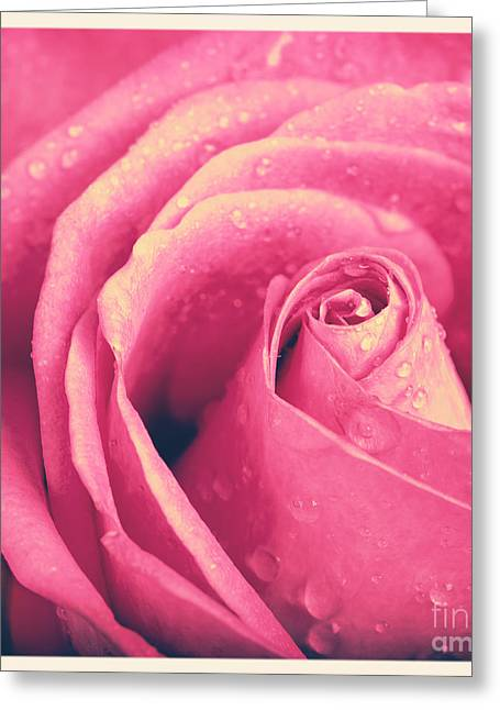 Vintage Rose Photo Greeting Card by Jane Rix