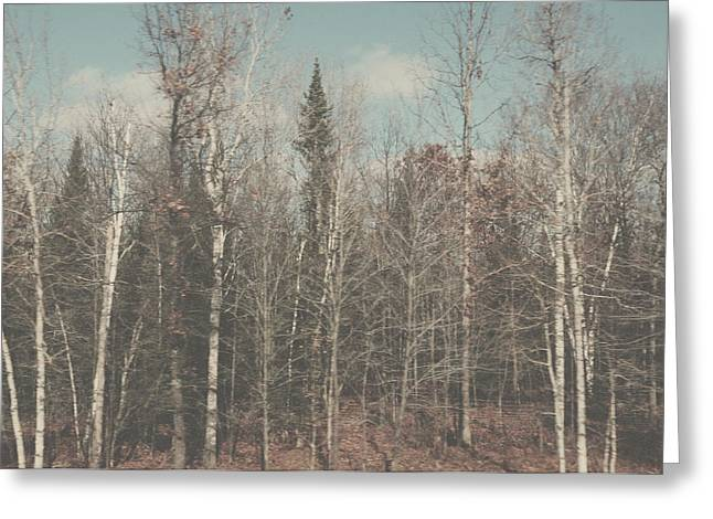Vintage Style Forest Photo Greeting Card by Elle Moss