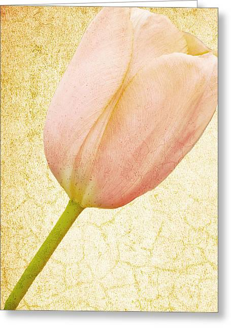 Vintage Tulip Greeting Card by Lesley Rigg