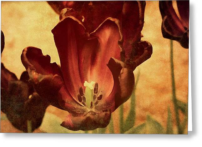 Vintage Tulips Greeting Card