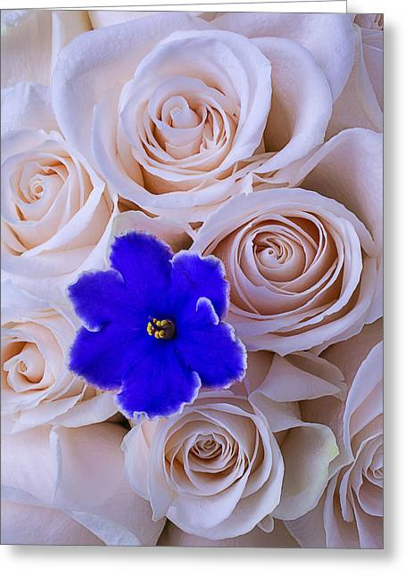 Violet And Roses Greeting Card by Garry Gay