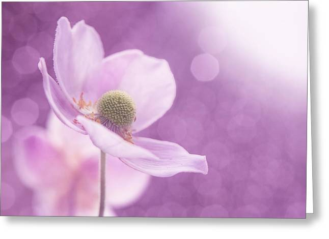 Violet Breeze 4x3 Greeting Card
