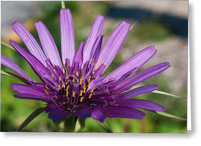 Violet Flower Greeting Card by Carlos V Bidart
