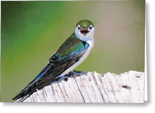 Violet Green Swallow Greeting Card by Dianna Ponting