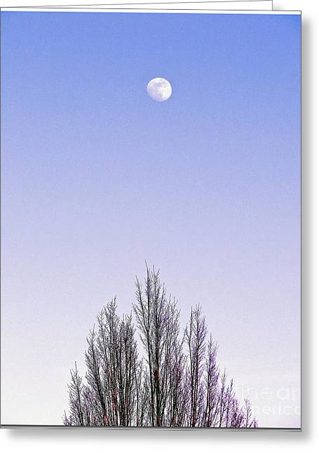 Greeting Card featuring the photograph Violet Moon And Treetop by Chris Anderson