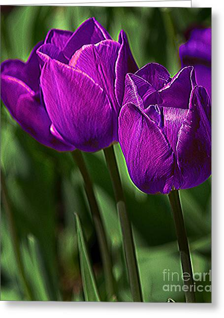 Violet Tulips 2 Greeting Card by Susan Crossman Buscho