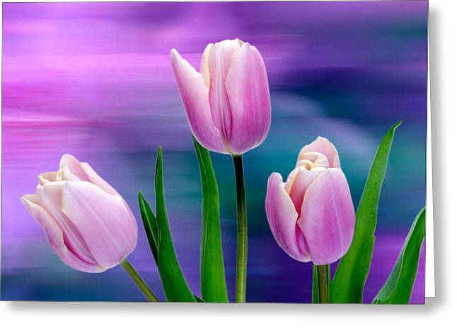 Violet Tulips Greeting Card by John Pagliuca