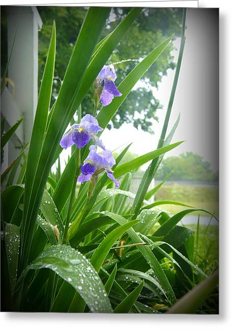 Greeting Card featuring the photograph Iris With Dew by Laurie Perry