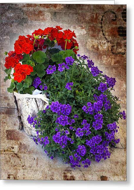 Greeting Card featuring the photograph Violets And Geraniums On The Bricks by William Havle
