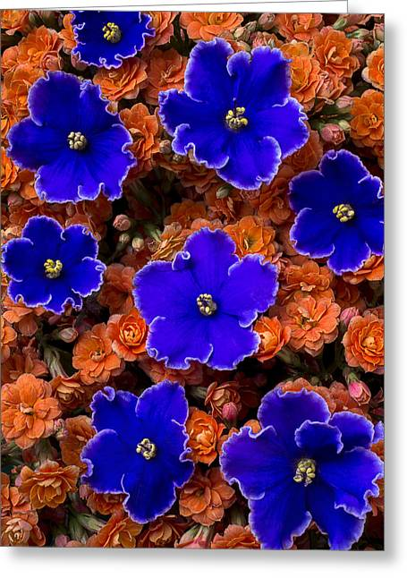 Violets And Kalanchoe Greeting Card