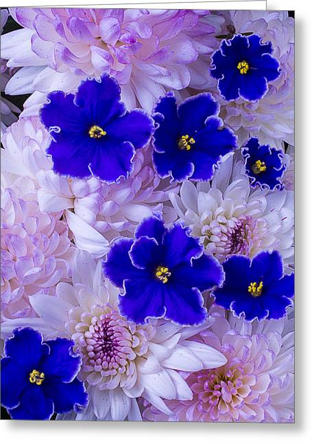 Violets And Mums Greeting Card by Garry Gay