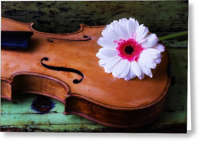 Violin With White Daisy Greeting Card by Garry Gay
