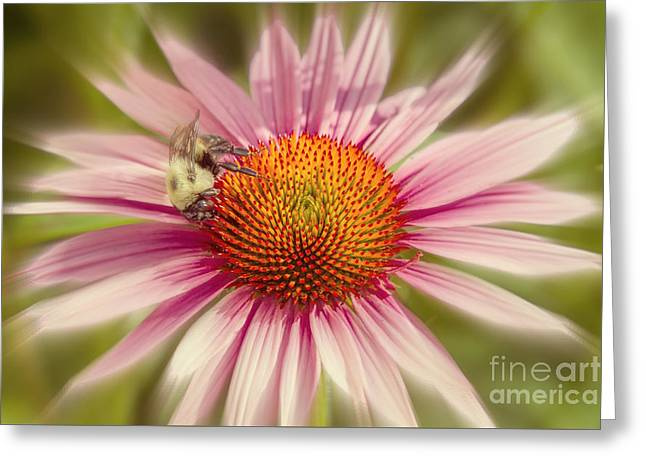 Vip Very Important Pollinator Greeting Card