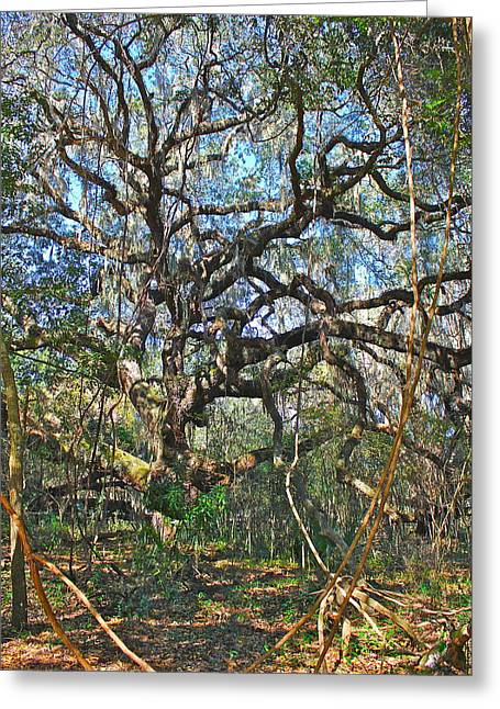 Greeting Card featuring the photograph Virgin Forest by Cyril Maza