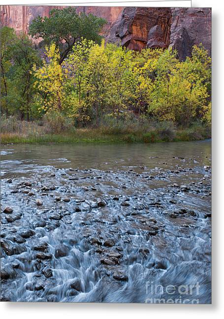 Virgin River In Fall - Zion Greeting Card by Sandra Bronstein